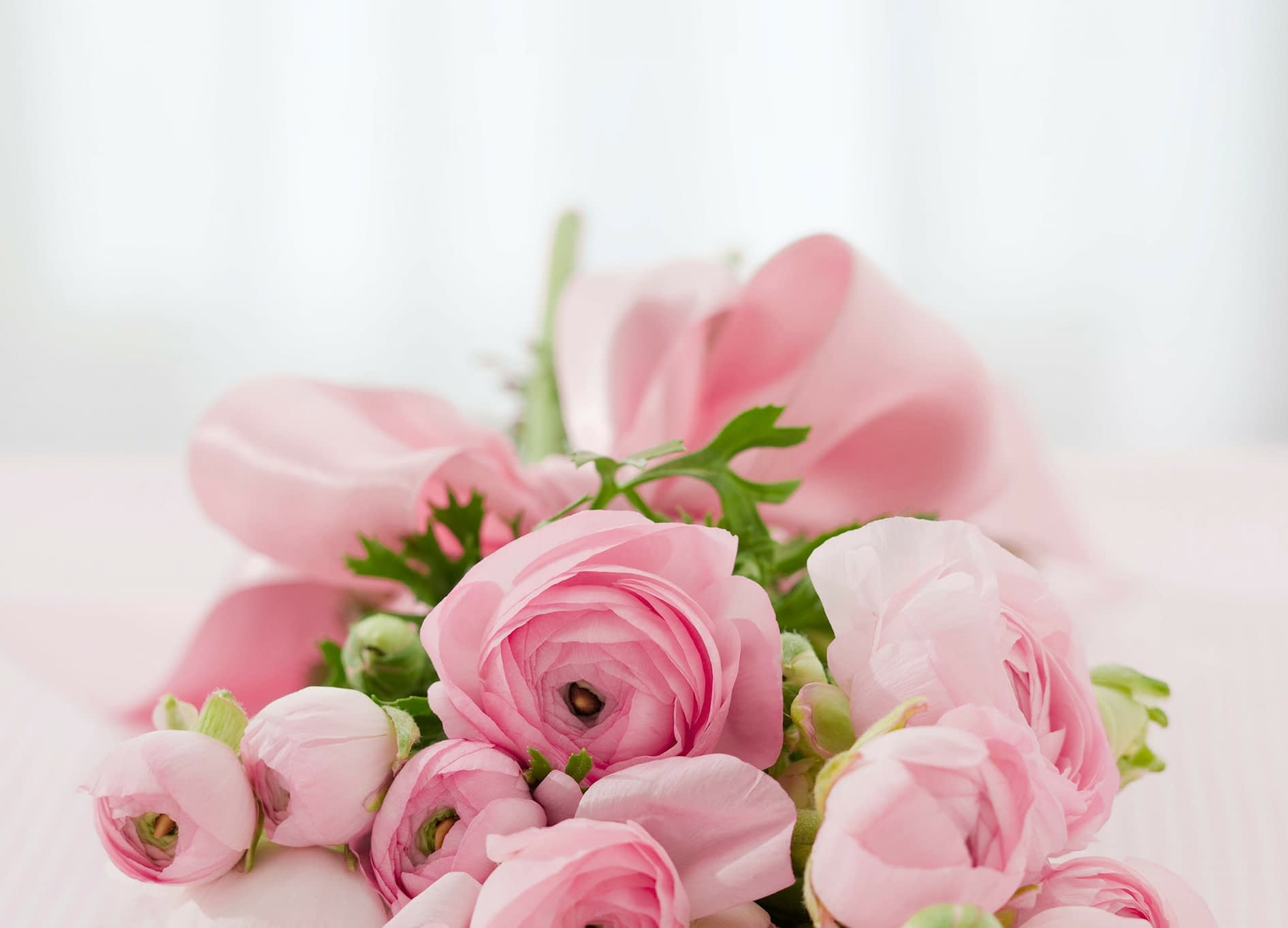 roses-142876_1920-2.jpg