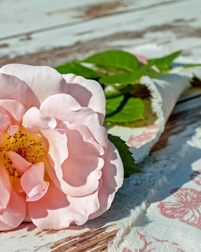 rose-2378156_1280.jpg